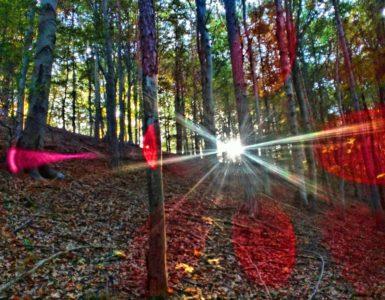 les, slunce, paprsky, ráno