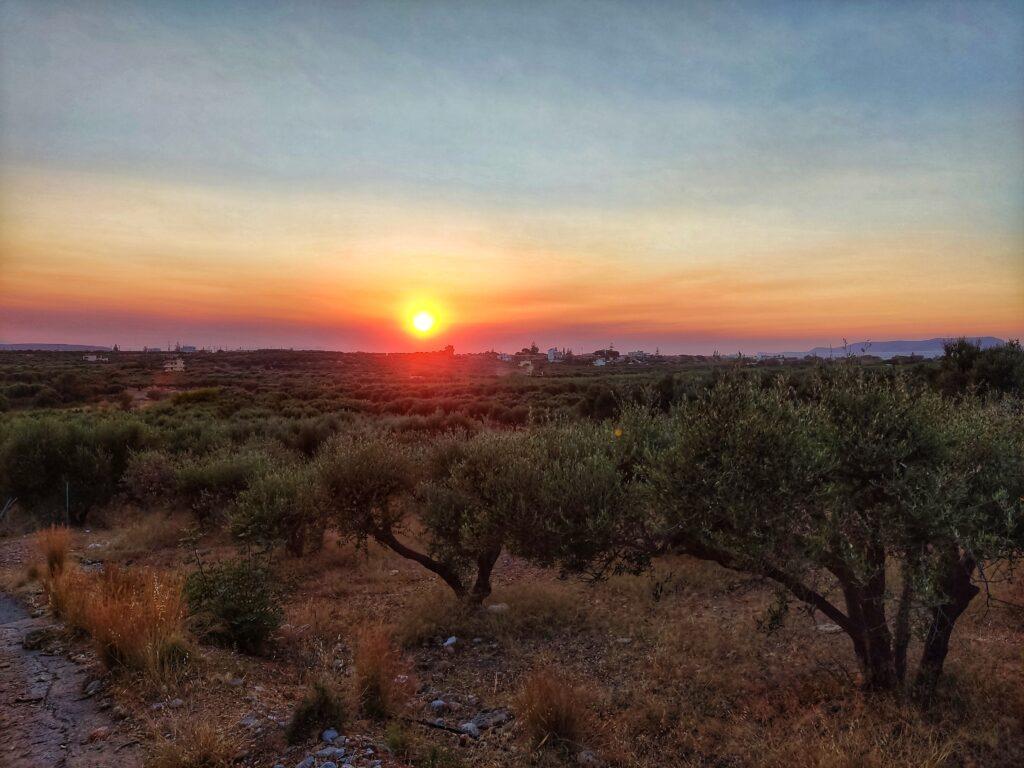 Pohled na olivovníky při západu slunce, Gouves